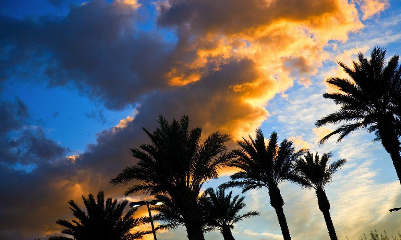 Orlando Summer 2019 - Image 3