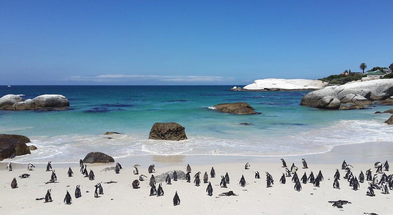 Cape Town Sampler - Image 3