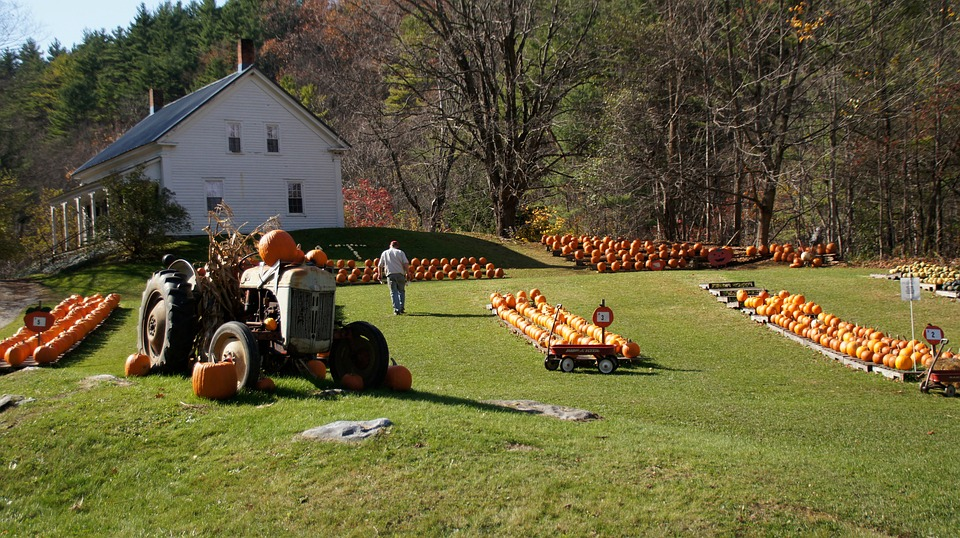 NEW ENGLAND IN THE FALL - Image 3