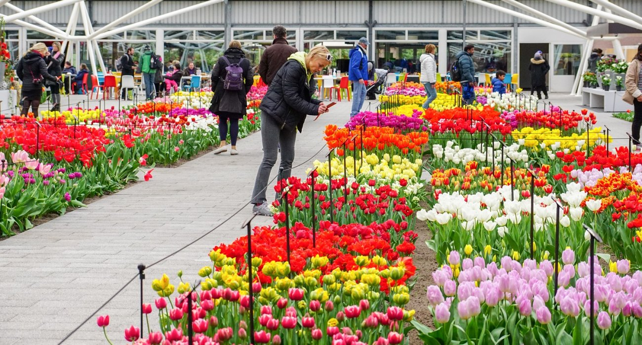 Amsterdam and the Glorious Dutch Bulb Fields - Image 5