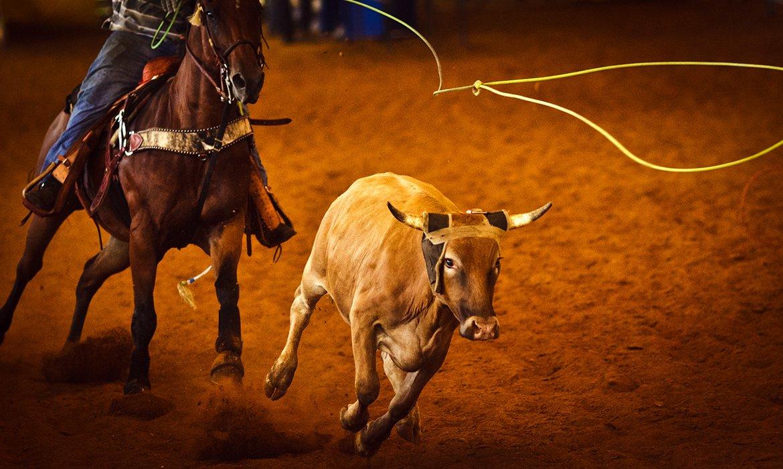 Experience Texas! Dallas, San Antonio and Texan Ranch Stay - Image 4