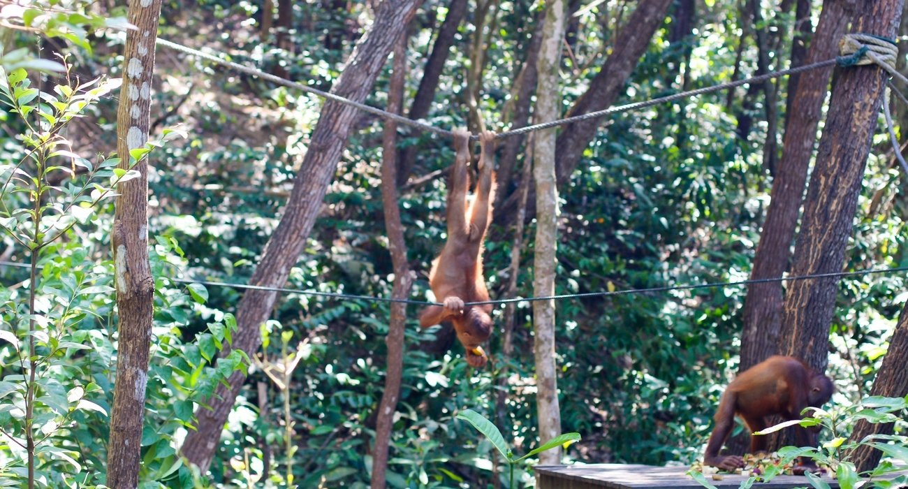 Malaysia and Borneo May 10 Night Superdeal - Image 4