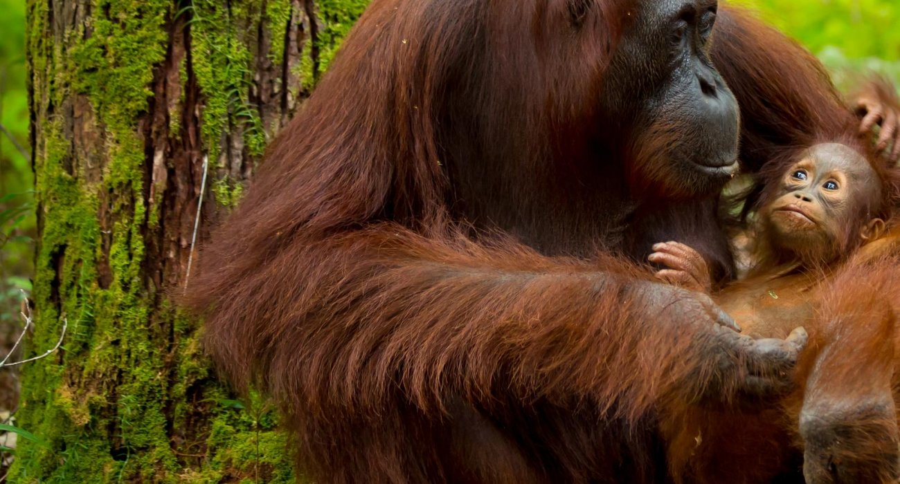 Malaysia and Borneo May 10 Night Superdeal - Image 5