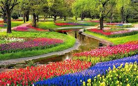 Amsterdam and the Glorious Dutch Bulb Fields - Image 3