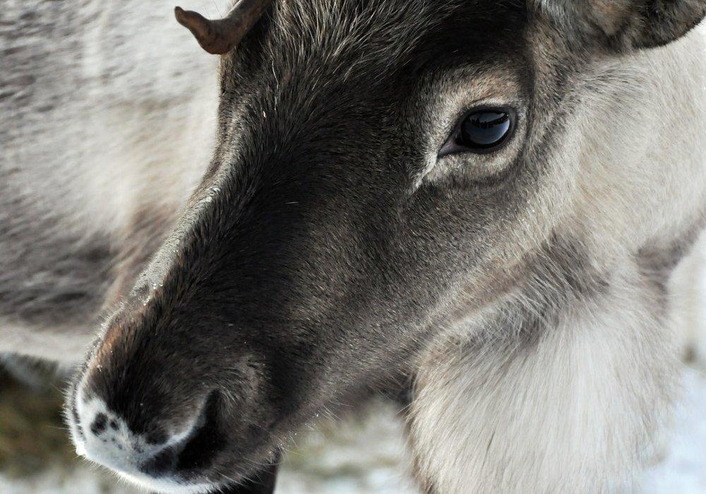Lapland Daytrip to Meet Santa - Image 2