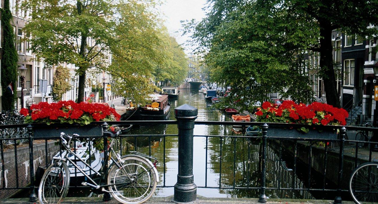 Christmas Gift to Amsterdam - Image 1