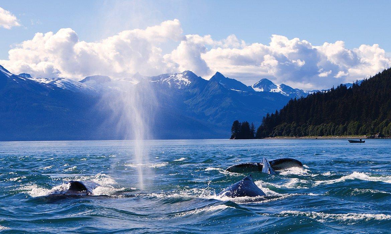 Alaska Fly/Cruise - Image 3