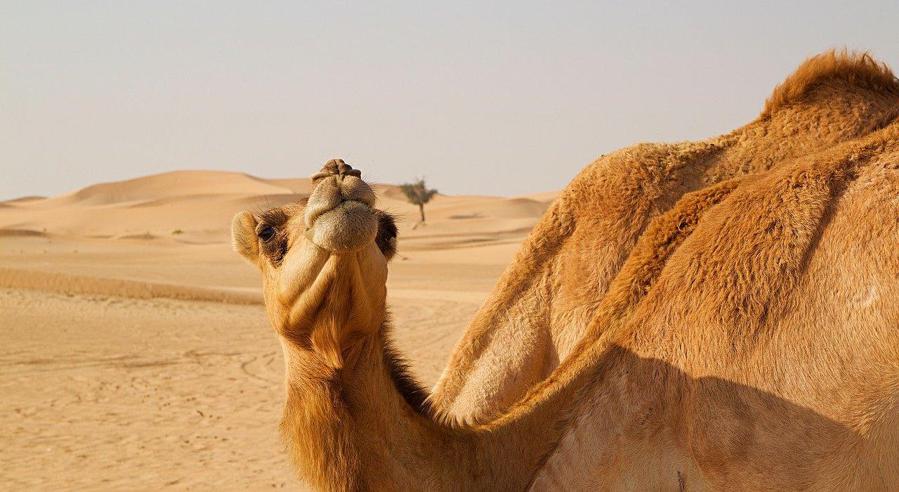 ABU DHABI, BANGKOK AND HUA HIN BEACH - Image 1