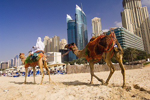 Winter Sunshine UAE Cruise - Image 1