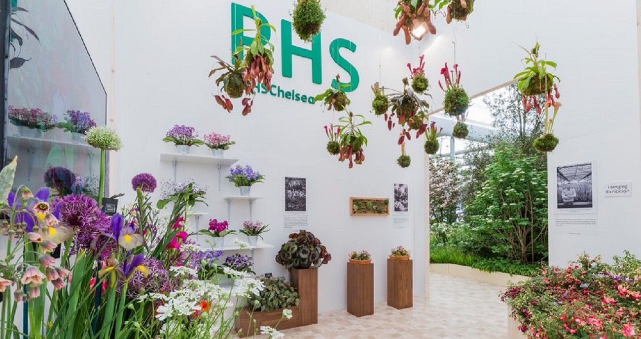 RHS Chelsea Flower Show and Syon House - Image 3