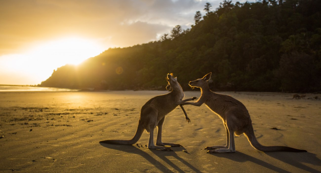 Jewels of Australia and New Zealand Cruise - Image 1
