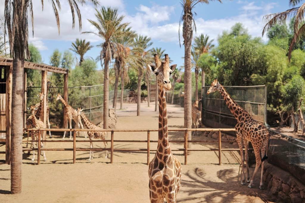 All Inc Fuerteventura Plus Unltd Oasis Park Entry - Image 9