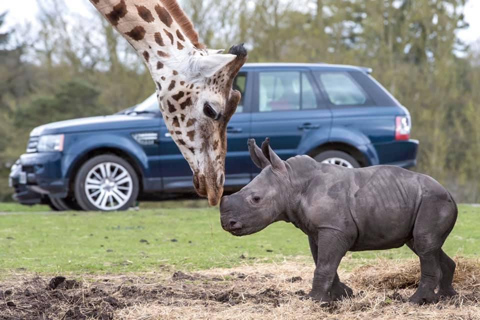 Cbeebies, Safari Park & Nickelodeon Land - Image 4