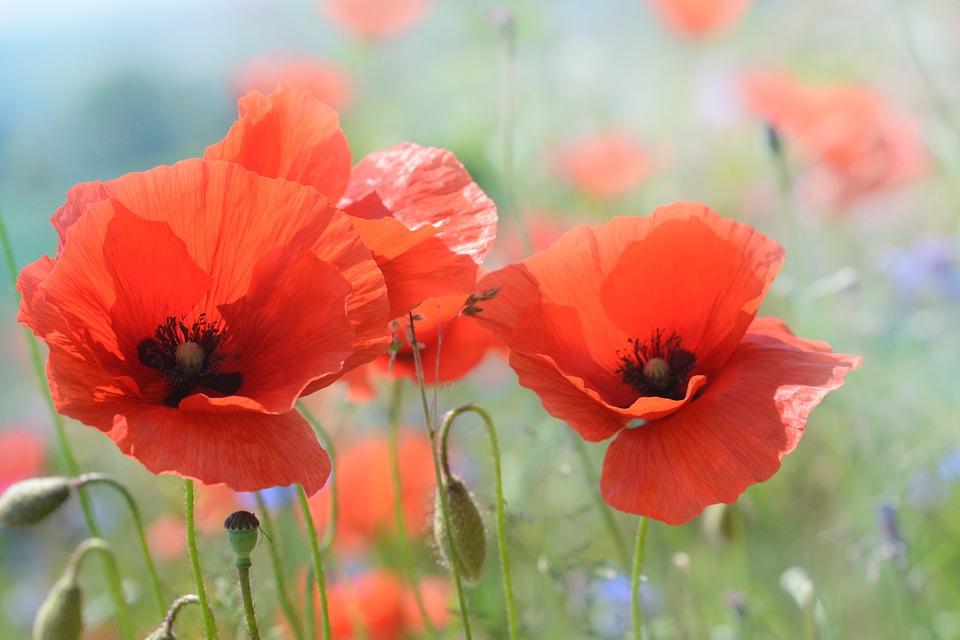 Flanders & Somme Battlefield Tour - Image 1