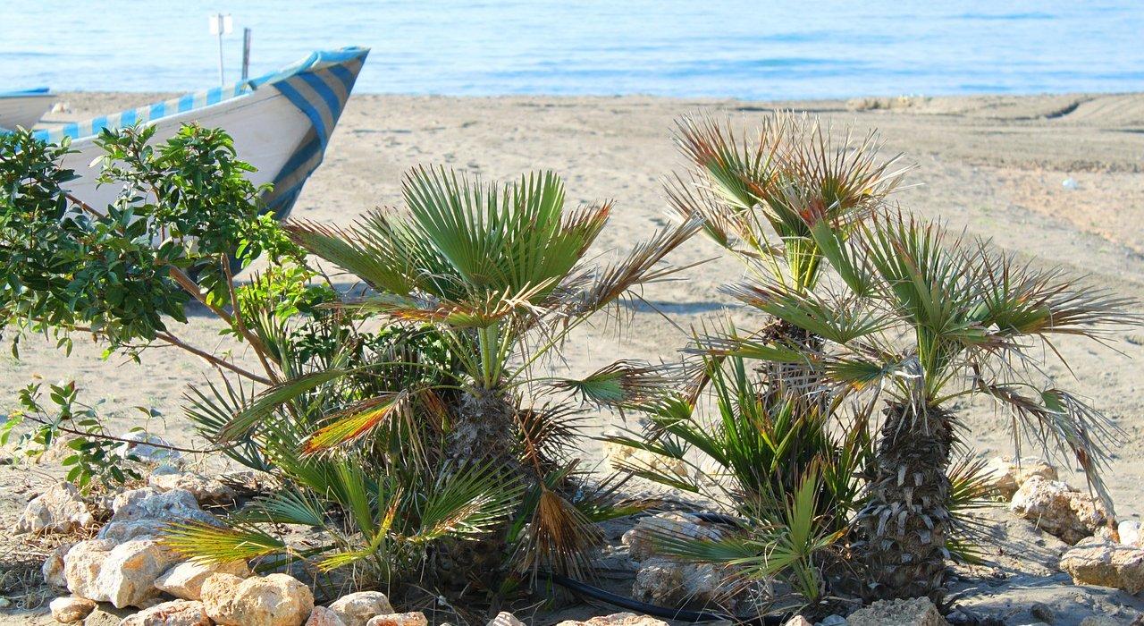 Costa Del Sol February Sunshine - Image 2