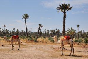 4* Marrakech Short Break
