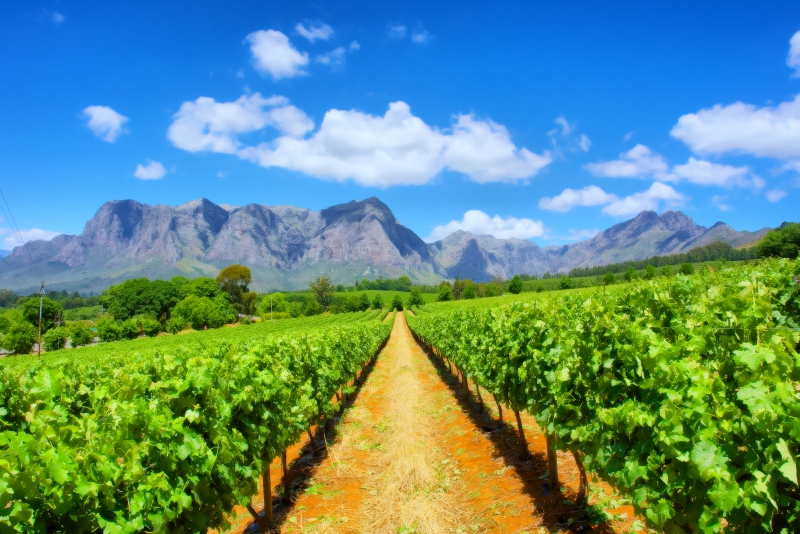 Cape Town, Winelands, Garden Route & Safari - Image 1