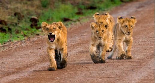 Extraordinary South African Safari - Image 3