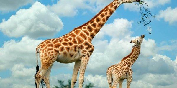 Extraordinary South African Safari
