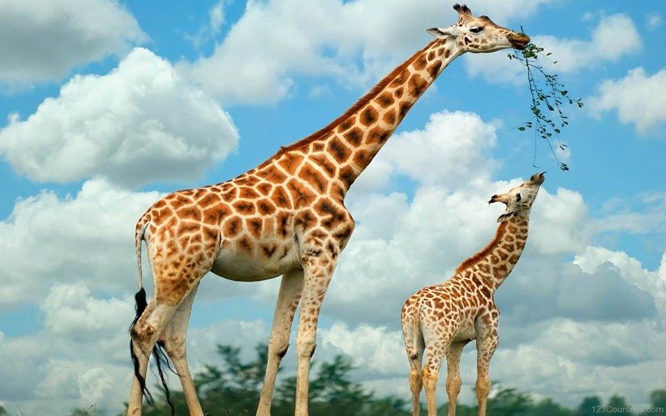 Extraordinary South African Safari - Image 1