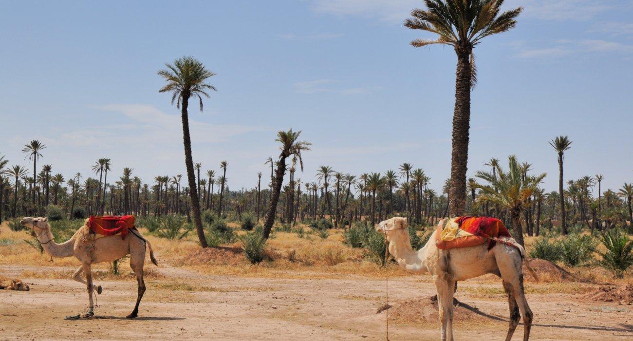 Marrakech December Winter Sun - Image 2
