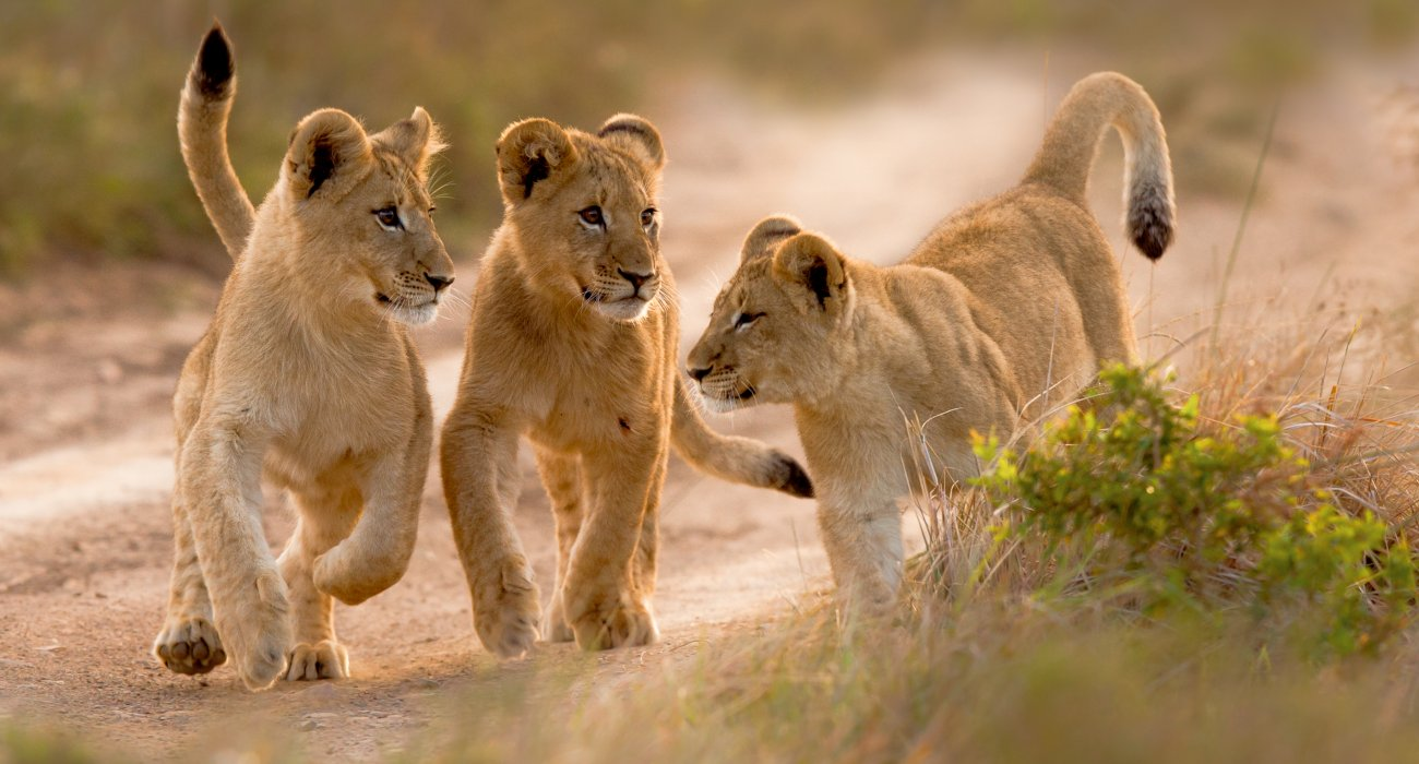 15 Day South African Surprise - Image 2