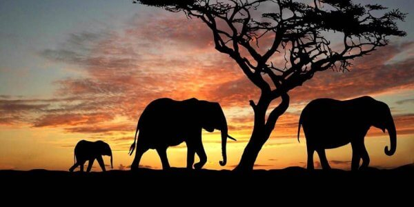 South Africa Full Escorted Tour
