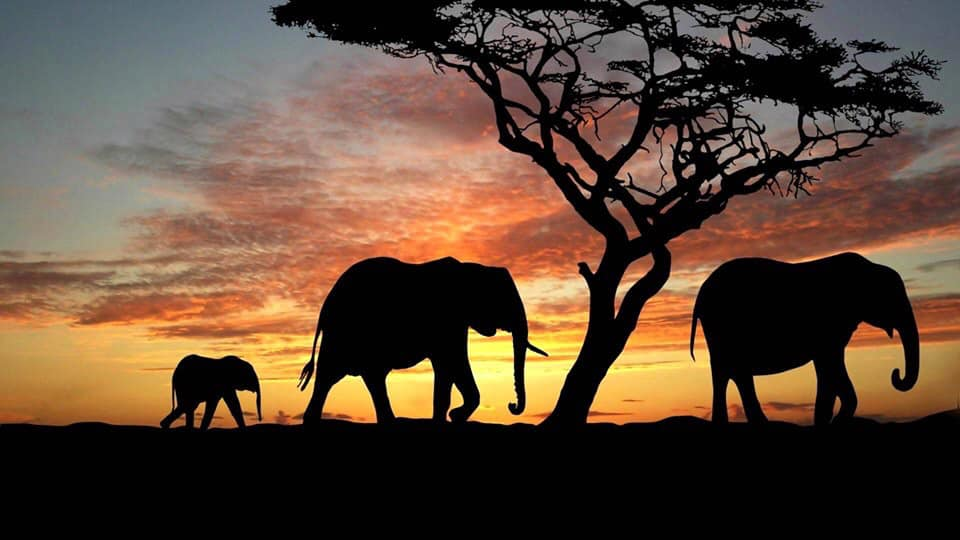 South Africa Full Escorted Tour - Image 1
