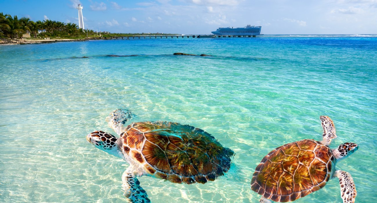 Western Caribbean & Perfect Day Cruise - Image 10